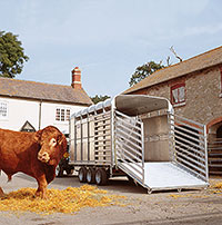Ifor Williams Livestock Trailers
